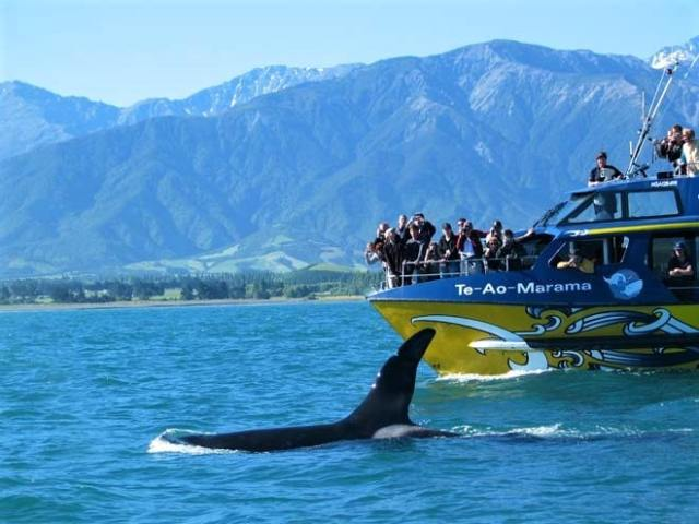 whale watching at Kaikoura, South Island, New Zealand