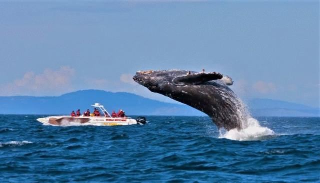 whale watching at Quebec city