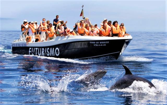 whale watching at The Azores, Portugal