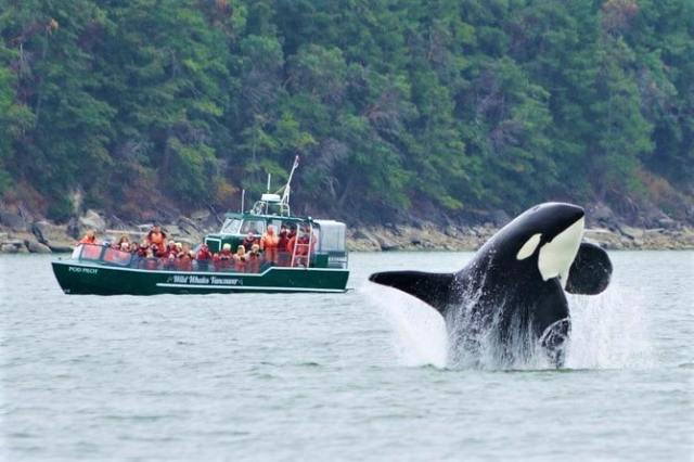 whale watching at Vancouver Island, British Columbia, Canada