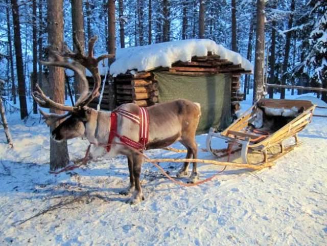 Reindeer Sledge, Lapland, Finland
