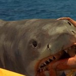 JAWS REMAKE CONFIRMED FOR 2019