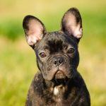 DOG THAT WITNESSED LOUIS C.K. JERKING OFF IGNITES NEW #METOO DEBATE