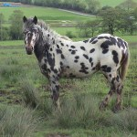 5 Strange Horse Breeds In The World The Style Inspiration