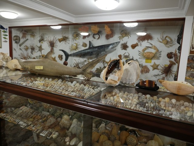The Style Trust Winter School Holiday Activities for Kids in the South West_Bellview Shell Collection