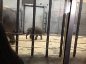 Awww, baby elephant.
