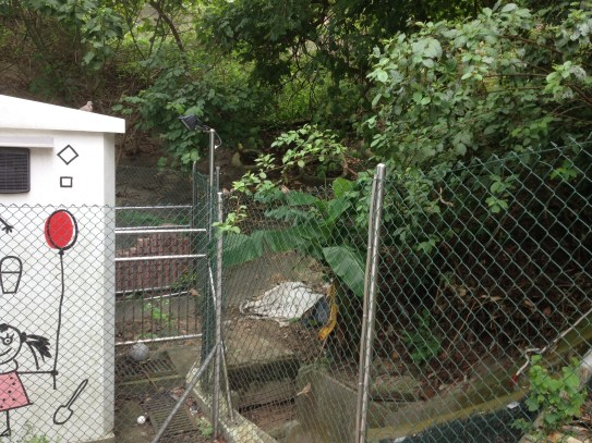 New 1x/week duty location includes me walking close to a fence looking for little birds flitting around...