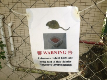 Look out, don't eat rat bait!