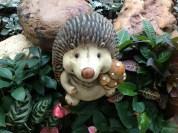 I never miss visiting hedgehogs!