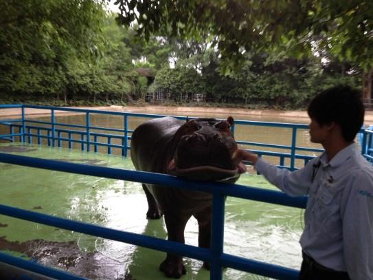 Yes, we met a hippo.