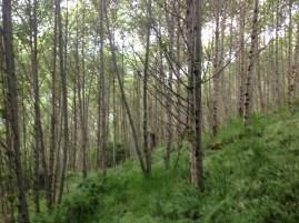 Hello trees.