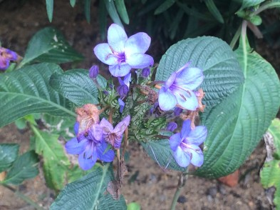 Flowers in part of school's garden.