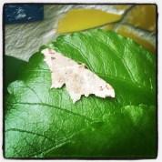Hello moth!