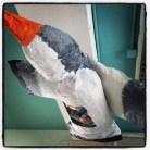 Bird has eaten plastic- water pollution