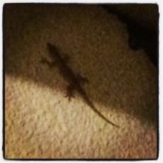 Hooray for geckos