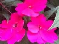 Hi Pretty Flowers