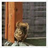 Squirrel had a long tail!