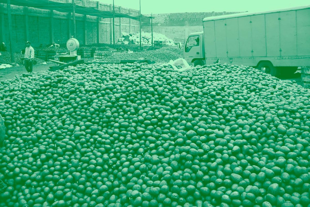 https://i0.wp.com/thesubmarine.it/wp-content/uploads/2017/06/oil-will-be-extracted-from-avocados-like-these-to-be-used-in-cosmetics-and-then-exported-1.jpg?fit=1200%2C803&ssl=1