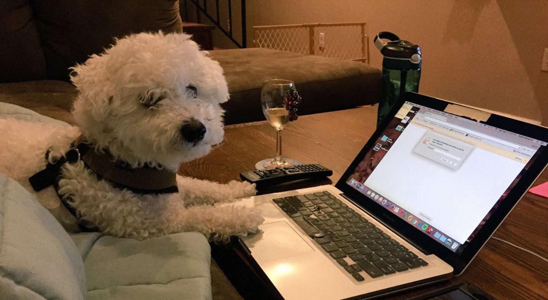 <em>Hello, World!</em> <br />Su Twitter nessuno sa che sei un cane
