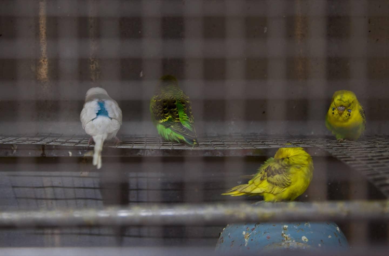 Siamo stati all'ospedale per uccelli vegetariani di Old Delhi