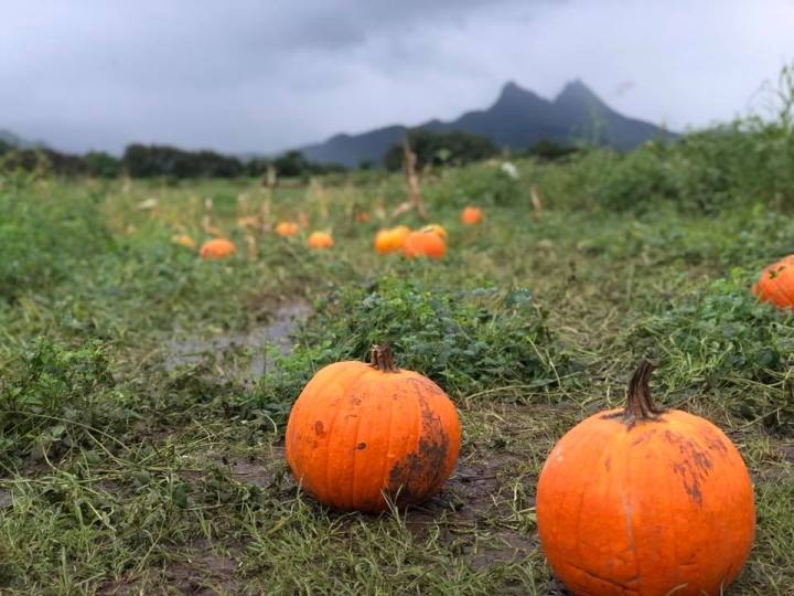6 Virtual and Socially-Distanced Fall Events on Oahu