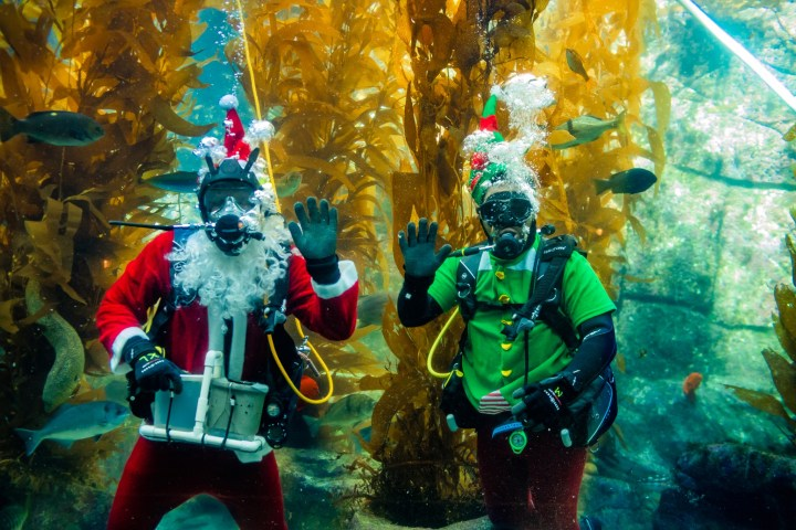 6 Great Holiday Events in San Diego