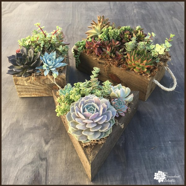 Buy hand built reclaimed wood planter boxes filled with colorful succulents