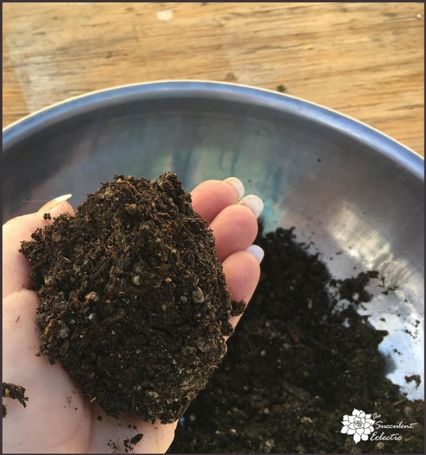DIY succulent kokedama ball soil preparation makes a tight ball