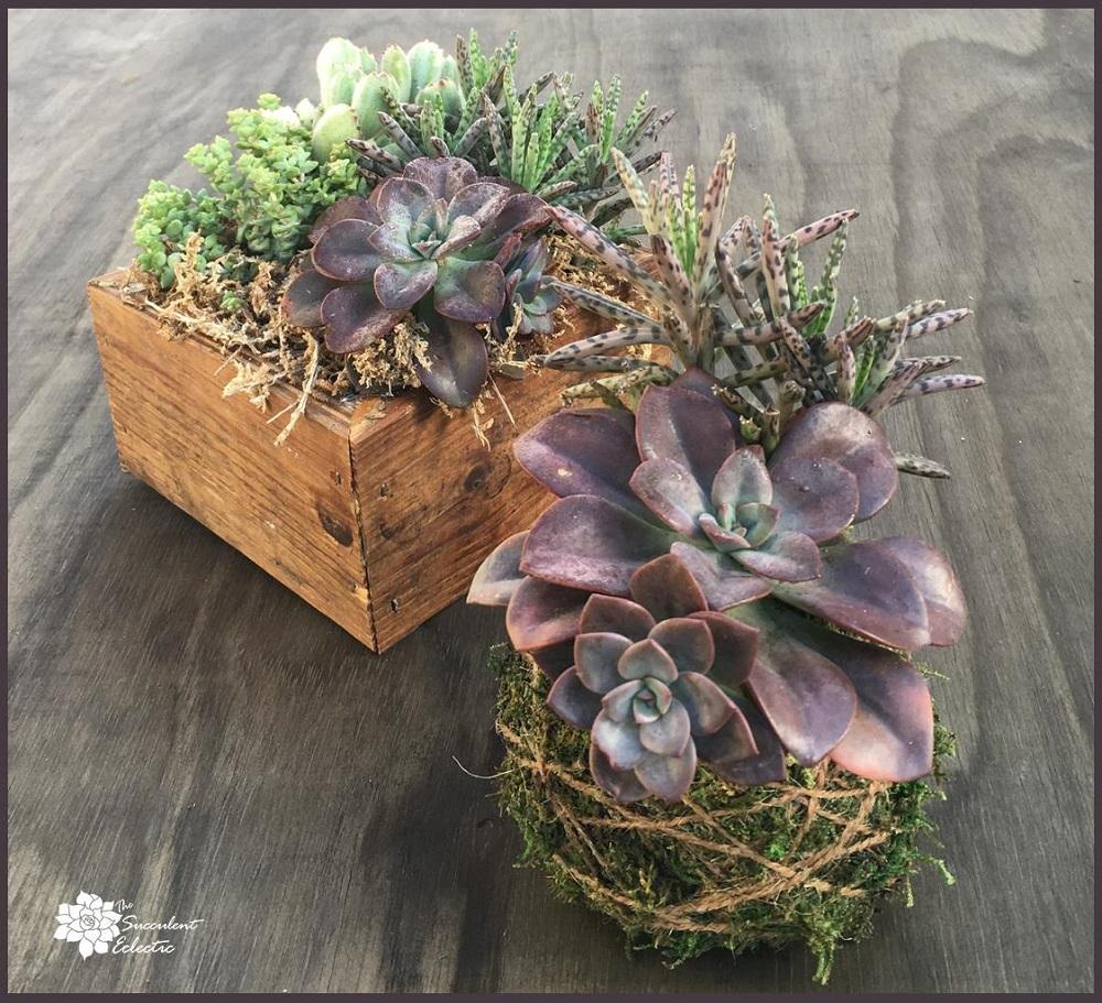 succulent kokedama moss ball
