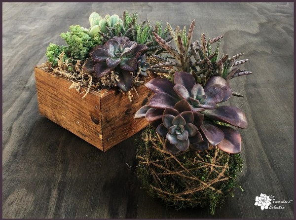 succulent kokedama ball and reclaimed wood succulent planter box for sale
