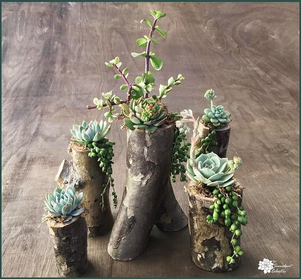 DIY Tree branch planter fully planted - group shot