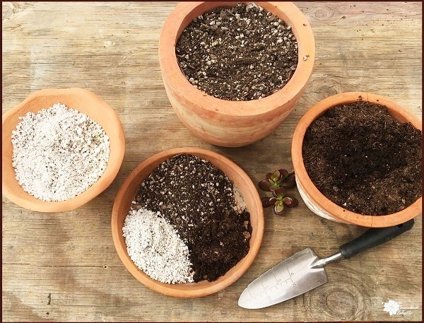 DIY succulent soil recipe with pumice and coco coir