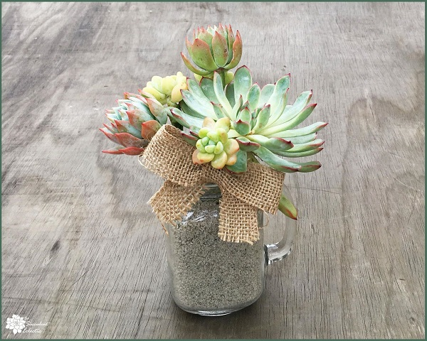 echeveria and sedum clavatum in succulent bouquet