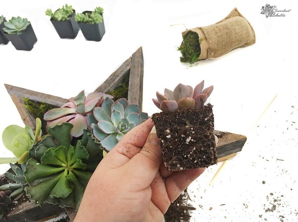 How to add succulents to Star Shaped Planter
