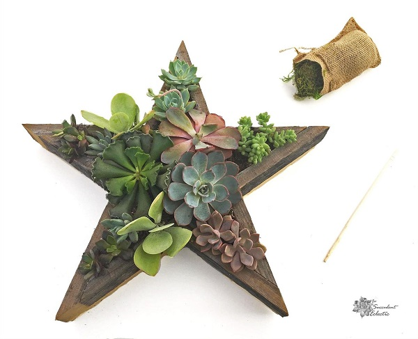 fully planted Star Shaped Planter needs moss