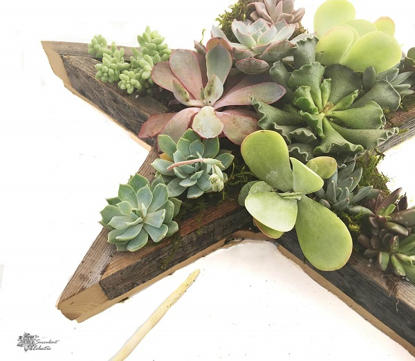 view of moss added to Star Shaped Planter