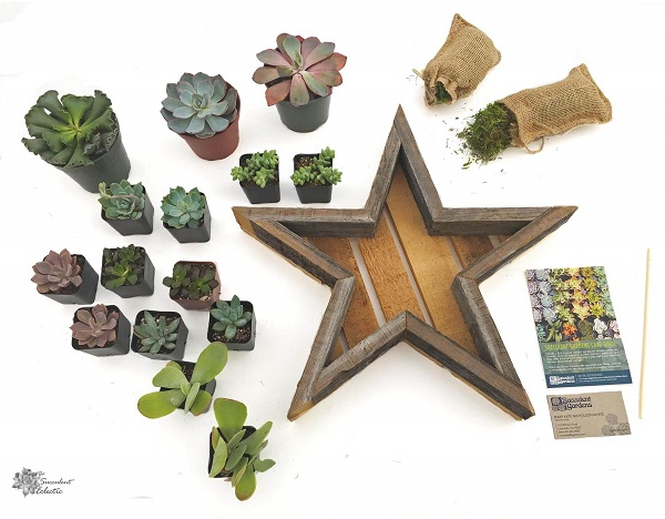 reclaimed wood Star Shaped Planter for Succulents