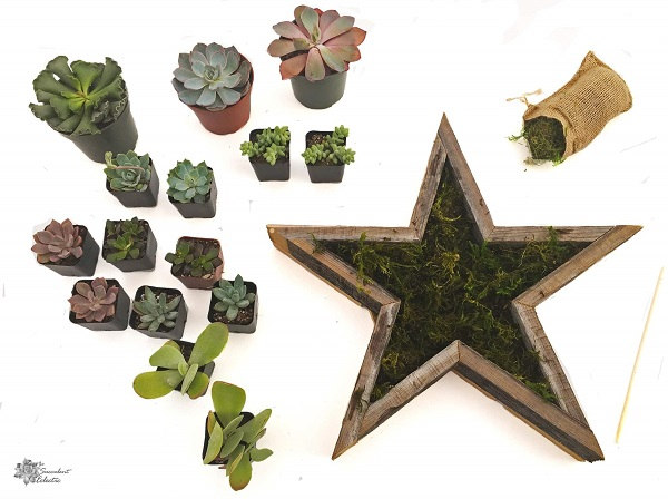 Line Star Shaped Planter with moss