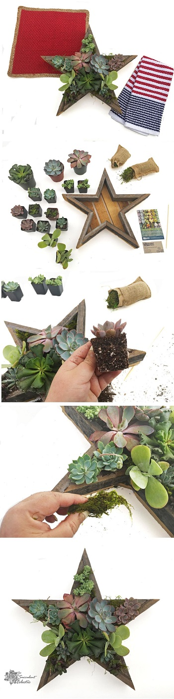 steps to planting 4th of July DIY succulent star planter
