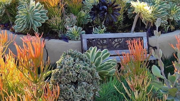 seating bench in a succulent garden