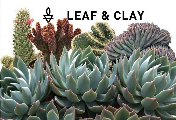 Leaf & Clay - rare succulents and cactus