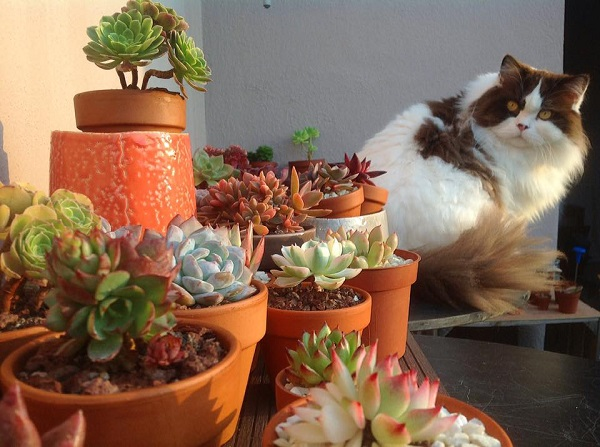 Cat gazing at an array of mixed succulents