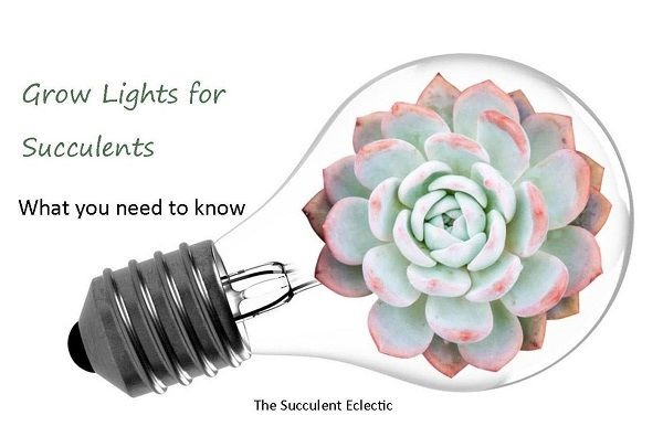 illustration of grow lights for succulents guide