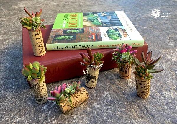 group of succulent magnet wine cork planters