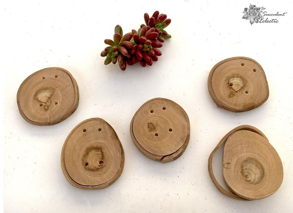DOY rustic Christmas ornaments with succulents
