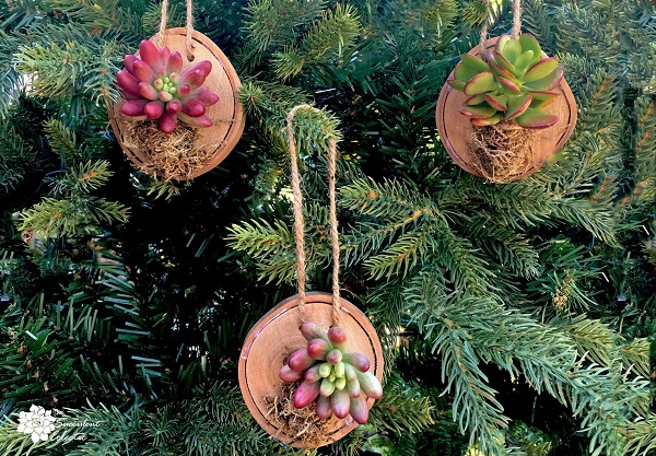 3 wood slice ornaments with succulents hanging on Christmas tree