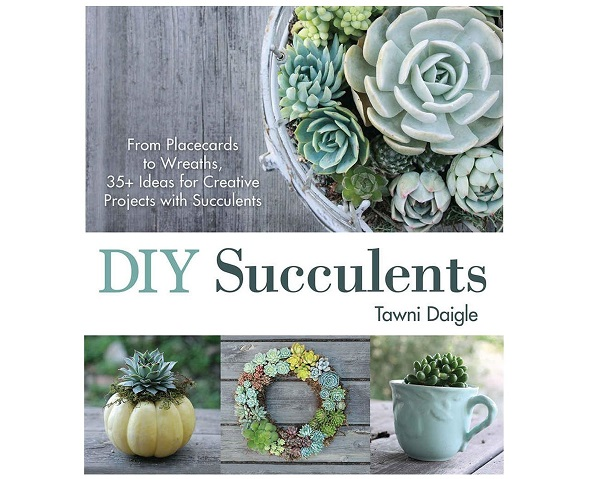 DIY Succulents by Tawni Daigle