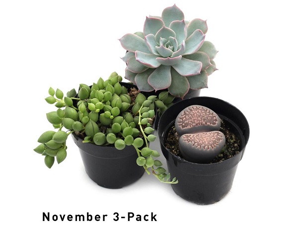 subscribe to succulents of the month club with Leaf & Clay
