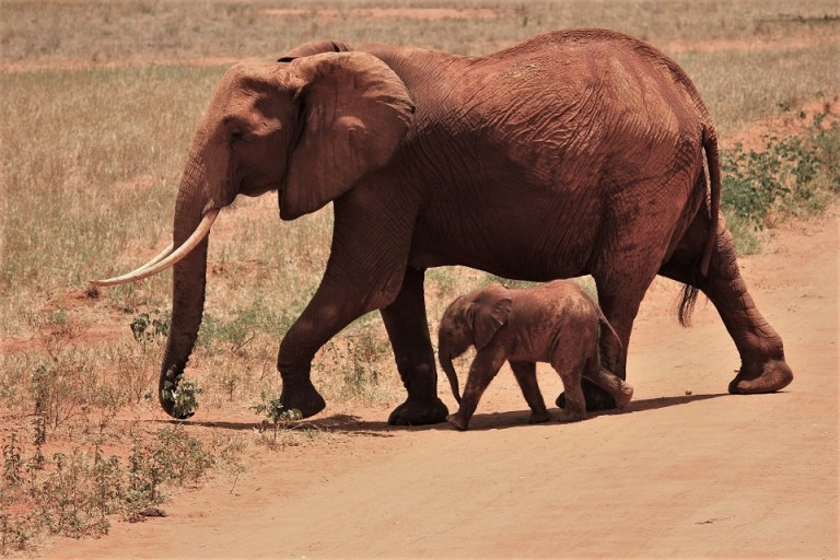 Addo Elephant Park The Budget Traveller's Guide to the Garden Route Road Trip