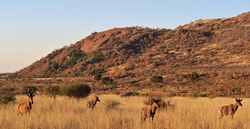 Pilanesberg Budget Breakdown The Cost of Solo Travel in South Africa